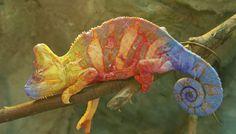 How Do Reptiles Reproduce? | Sciencing