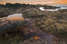 10 Important Marine Ecosystems: Rocky Shore Ecosystem