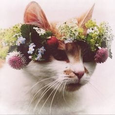flower crowns have been taken to a whole new level with a kitty made even more beautiful with a similarly beautiful crown.