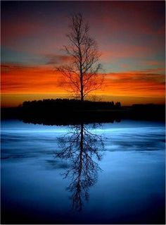 A lone tree & its' reflection at sunset