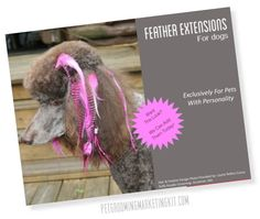 Feather extensions poster for dog groomers. http://www.petgroomingmarketingkit.com/dog-grooming-poster-templates.html