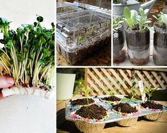 Germinate Seeds in Upcycled Materials | Gardening Ideas On a Budget