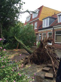 Wat een natuurgeweld zeg..... #leidsebuurt #Haarlem