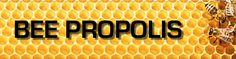 Bee Propolis | All You Need To Know About Bee Propolis |