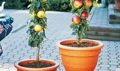 66 things you can grow in containers. I want to look into this some more.