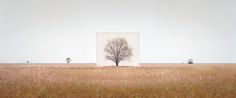 Myoung Ho Lee, a Korean photographer who made his début in America in 2009 at the Yossi Milo Gallery in Manhattan to show eight color images, entitled the Tree Series, filed a copyright infringemen...