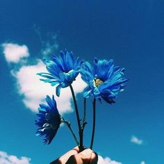 blue, flowers, and sky image Blue Aesthetic Dark, Rainbow Aesthetic, Aesthetic Colors, Flower Aesthetic, Aesthetic Pictures, Photo Bleu, Applis Photo, Blue Wallpaper Iphone, Blue Wallpapers