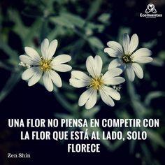 Una flor no piensa en competir con la flor de al lado, solo florece.