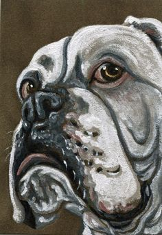 ACEO ATC White Boxer Pet Dog Suede Art Original Painting-Carla Smale #Realism