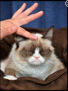 #GrumpyCat #meme Grumpy Cat stuff, gifts, coupons, meme on www.pinterest.com/erikakaisersot