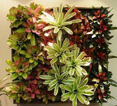 Living Wall of Bromeliads