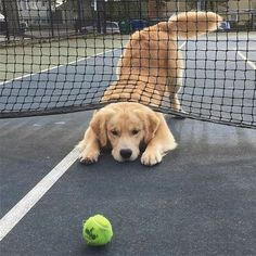 One of my favorite dogs playing one of my favorite sports!