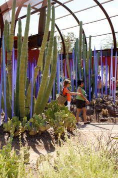 Chihuly Sculpture, Desert Botanical Garden - Phoenix, Arizona - Google Search