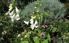 Weiß blühender Fingerhut leuchtet im Dunkel. Adele, Plants, Poisonous Plants, Medicinal Plants, Dark, House Plants, Gardening, Plant, Planting