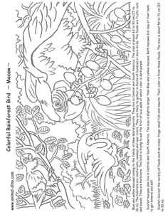layers of amazon rainforest coloring pages dukabooks rainforest animals. Black Bedroom Furniture Sets. Home Design Ideas