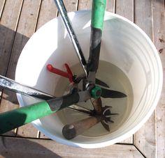 {Garden} How To Clean Rusty Garden Tools - The Easy Way! - Growing...                                                                                                                                                                                 More