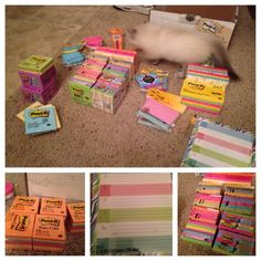ndrummond:  Post-it treasure chest came in! Love the colors and variety of sizes. So happy there are some little ones, I love using those in my planner. I even have a few large planner type post-it's!  Can't wait to use these next year! Going to do a ton of post-it critiques and exit tickets. (Can't believe I got all of this for $42!) Bonus: kitten photobomb. He kept attacking them.   15 more school days, and the last 4 are 1/2 days. So close to summer!
