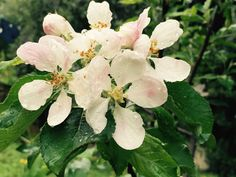 Rain on rose blossom
