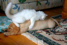 Amigos até dormindo
