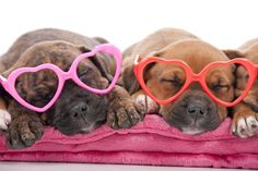Valentine's Day: Show Some Pet Safety Love