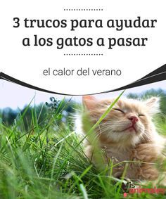 3 trucos para ayudar a los gatos a pasar el calor del verano Las mascotas también sufren las altas temperaturas estivales. Por eso te contamos cómo puedes ayudar a tu gato a pasar el calor del verano. #calor #gato #verano #consejos