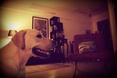 Loki watching tv