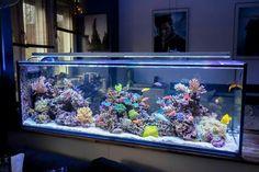 10 Tips on Designing a Freshwater Nature Aquarium Saltwater Aquarium Fish, Nature Aquarium, Home Aquarium, Saltwater Tank, Reef Aquarium, Fish Aquariums, Fish Tank Terrarium, Aquarium Terrarium, Aquarium Design
