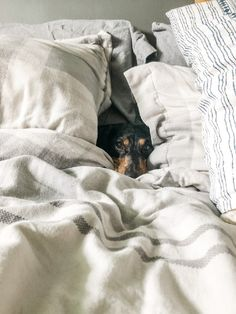 """Shamontiel wrote """"When your dog is on a bed-scratching mission ~ Your dog may be too territorial for a recycled dog bed"""" #dogowners #dogcare #petcare #DogsofTwitter #ILoveDogs (Photo credit: Jessica Johnston/Unsplash) Wedding Gown Cleaning, Wedding Gown Preservation, Super Cute Dogs, Professional Cleaning Services, Bed Liner, Oriental Design, White Dogs, Cotton Blankets, German Shepherd Dogs"""