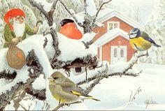 http://birds.nu/vyk_d/su_vinterfaglar.jpg