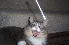 Sasha the cat is OBSESSED With Catching Falling Q-Tips (PHOTOS)
