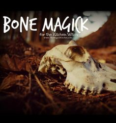 In the practice of Kitchen Magick, bones can play a key part in adding power to any Magickal recipe or spell. Tasty and useful, bones are essential to cooking and Magick. They create rich flavorful broths, offer vital nutrients, and embody a powerful Magickal essence. Today we will take a … Continue reading