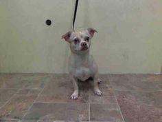 » Urgent Dogs: Manhattan
