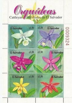 Orquídeas bifoliadas de El Salvador (1999)