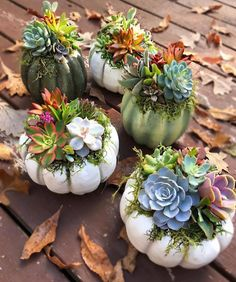 Merge your succulents into fall decor! We love these cute succulent pumpkins by with So so cute. Merge your succulents into fall decor! We love these cute succulent pumpkins by with Succulent Arrangements, Cacti And Succulents, Planting Succulents, Planting Flowers, Floral Arrangements, Succulent Gardening, Succulent Terrarium, Container Gardening, Succulent Display