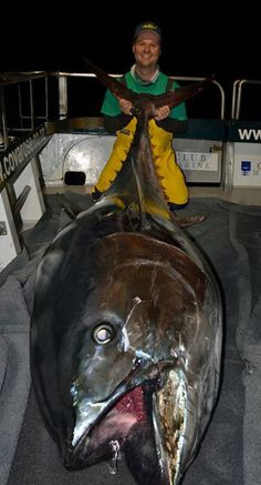 Monster bluefin tuna- Paul W is awesome! Fishing Photos, Fishing Tips, Sport Fishing, Fly Fishing, Fishing Reels, Sea Angling, Tuna Fishing, Offshore Fishing, Deep Sea Fishing