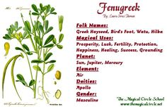 Fenugreek Magical Properties - The Magical Circle School - www.themagicalcircle.net