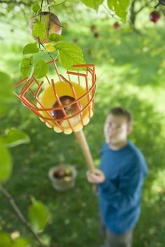 For those who have bad luck apple-buckin'...Fruit Picker, Apple Picker | 8 Foot Handle with Padded Basket