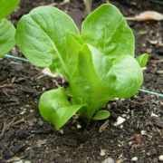Seedlings to Start in January