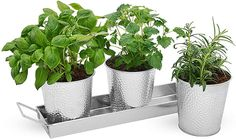 You can grow top hat blueberries, basil, and shrub tomatoes in metal pots. Galvanized Planters, Window Planters, Herb Planters, Herb Pots, Window Sill, Planter Pots, Saratoga Homes, Thing 1, Herbs Indoors