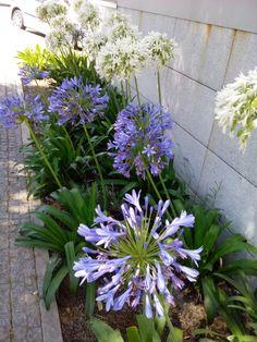 b e b e t e c a: NORTE DE PORTUGAL bebetecavigo.Flores en verano,están por todas partes. bebetecavigo.