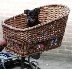 Lancashire Heeler #Dogs #Puppy