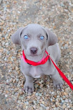 23 Perfect Dog Photos That Can Melt Any Cat Lover's Heart - animales - Salud de las Mascotas Cute Baby Animals, Animals And Pets, Funny Animals, Funniest Animals, Beautiful Dogs, Animals Beautiful, Cute Puppies, Dogs And Puppies, Pet Dogs