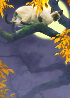 """A Siamese cat on a tree branch at night, with large moon and golden leaves, is art by illustrator Robert Papp. """"He has produced hundreds of cover illustrations for major publishers across the United States."""" #cat #moon #night"""