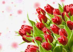 Bukiet, Czerwonych, Tulipanów