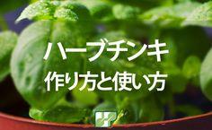 ハーブチンキとはハーブを高濃度のアルコールに漬けることで有効成分を効率よく抽出したものです。日本ではまだまだ認知度が低いですが、欧米諸国では簡単に手に入るため、多くの方が利用しています。今回はハーブチンキの様々な活用法や保存方法をお伝えしていきます。