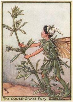 Goose-Grass-Fairy-by-Cicely-Mary-Barker-Wayside-Flower-Fairies-c1948-print