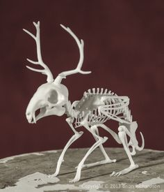 Wolpertinger Skeleton - Mythic Articulations