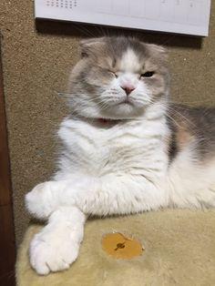 にょーたろー@猫バカ㌠(@sukeyotafumi)さん | Twitter