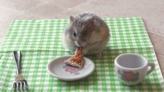 An overweight hamster angrily eating a tiny pizza:   30 Animal Pictures That Will Make You A Better Person