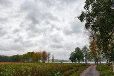 KATSE VASEMPAAN PÄIN: SYDÄMEN HILJAINEN ÄÄNI Viria, Country Roads, Life